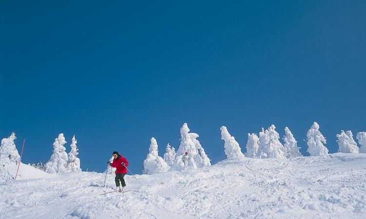 熱門日本滑雪場-八甲田