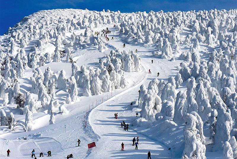 熱門日本滑雪場-藏王溫泉